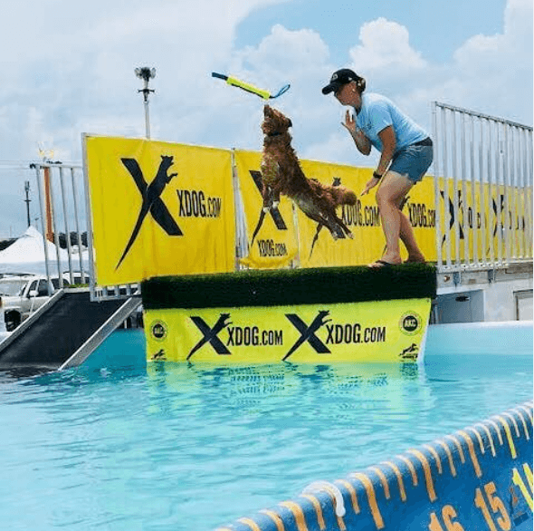 dog-diving-yellow